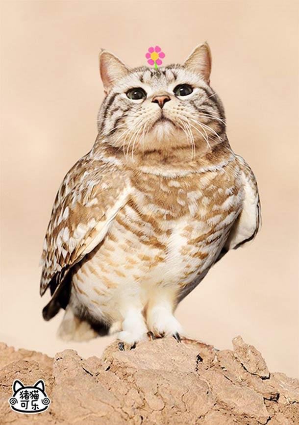 JANIS-EN-SUCRE - Semaine 20 27 - meowl-cat-owl-5