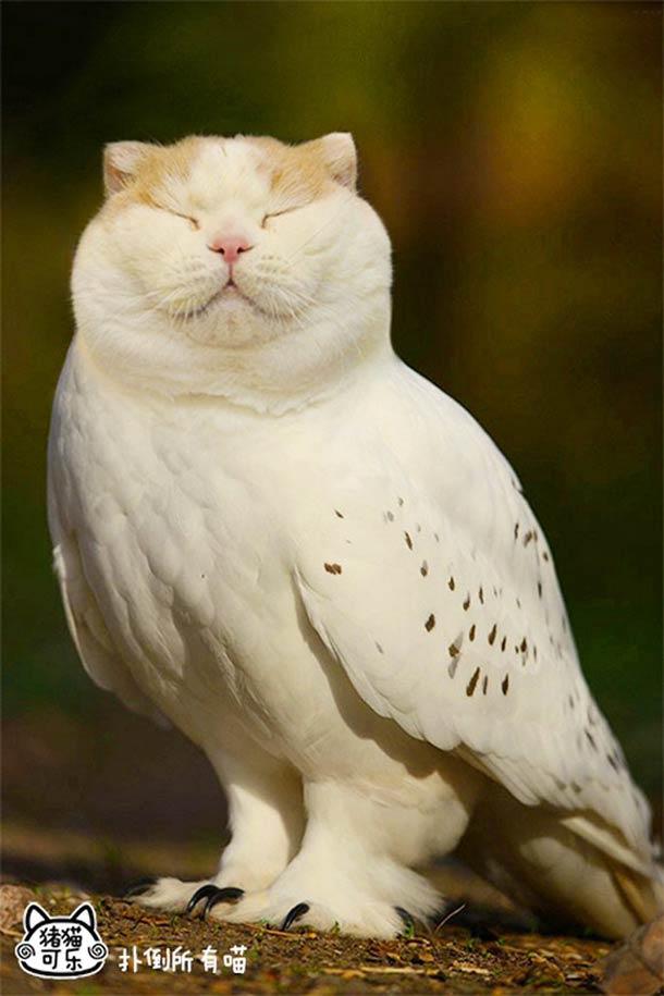 JANIS-EN-SUCRE - Semaine 20 28 - meowl-cat-owl-8